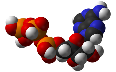Comprehensive Study Details How Omega-3s Benefit Your Metabolism